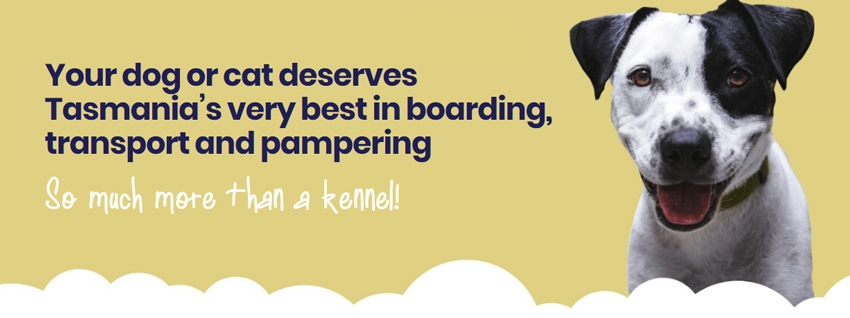 Pets Are Boarding banner