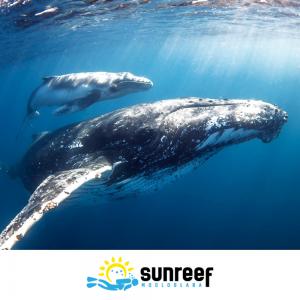 Swim with Whales Tour