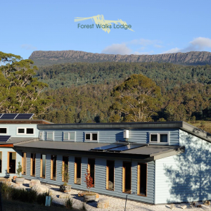 Forest Walks Lodge – Eco Tourism Experience