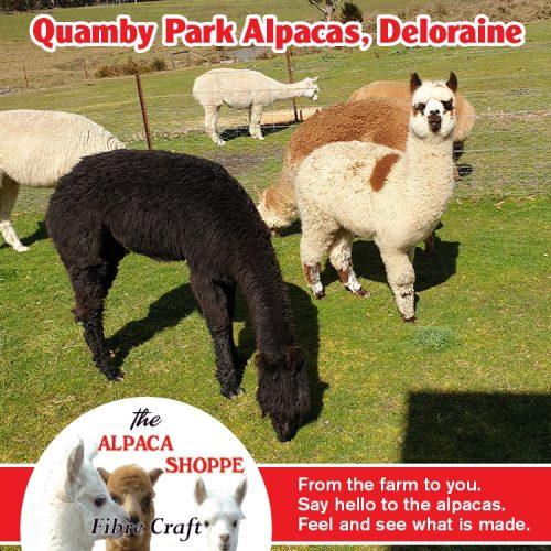 Quamby Farm Alpacas